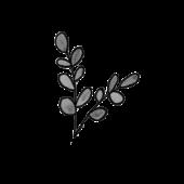 pflanze1_bw
